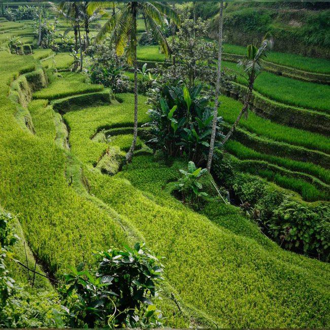 rijstenvelden-vietnam