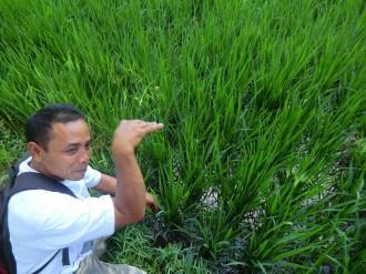 Indonesie, Riksja Travel, Vakantie Indonesie, op vakantie naar Indonesie, Travel Rumors, Indonesie online, vakantie boeken Indonesie, Vakantie Lovina, Lovina Indonesie, Munduk Indonesie, Excursie Munduk, Vakantie Munduk, Excursie Lovina, vissen in Indonesie, rijstvelden Indonesie, excursies in Indonesie, dagtrip Indonesie, dagje weg in Indonesie, Excursie Bali