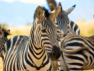 Africa, afrika, afrika safari, Tanzania, safari tanzania, tanzania afrika, reizen door afrika, rondreis afrika, backpack afrika, backpack tanzania, vakantie tanzania, vakantie afrika, tips afrika, holiday afrika, vakantietips afrika, tips tanzania, holiday tanzania, vakantietips tanzania, excursies tanzania, wat te doen in tanzania, hotel in tanzania, verblijf tanzania, reistips tanzania, riksja travel, kenia online, Travel Rumors, wildpark tanzania, wildpark afrika, vijfdaagse safari afrika, vijfdaagse safari tanzania, Lake Tarangire, de Serengeti, Ngorongorokrater, parken tanzania, parken afrika, National Park afrika, National Park tanzania, the big five afrika, the big five tanzania, the big five, the big five spotten
