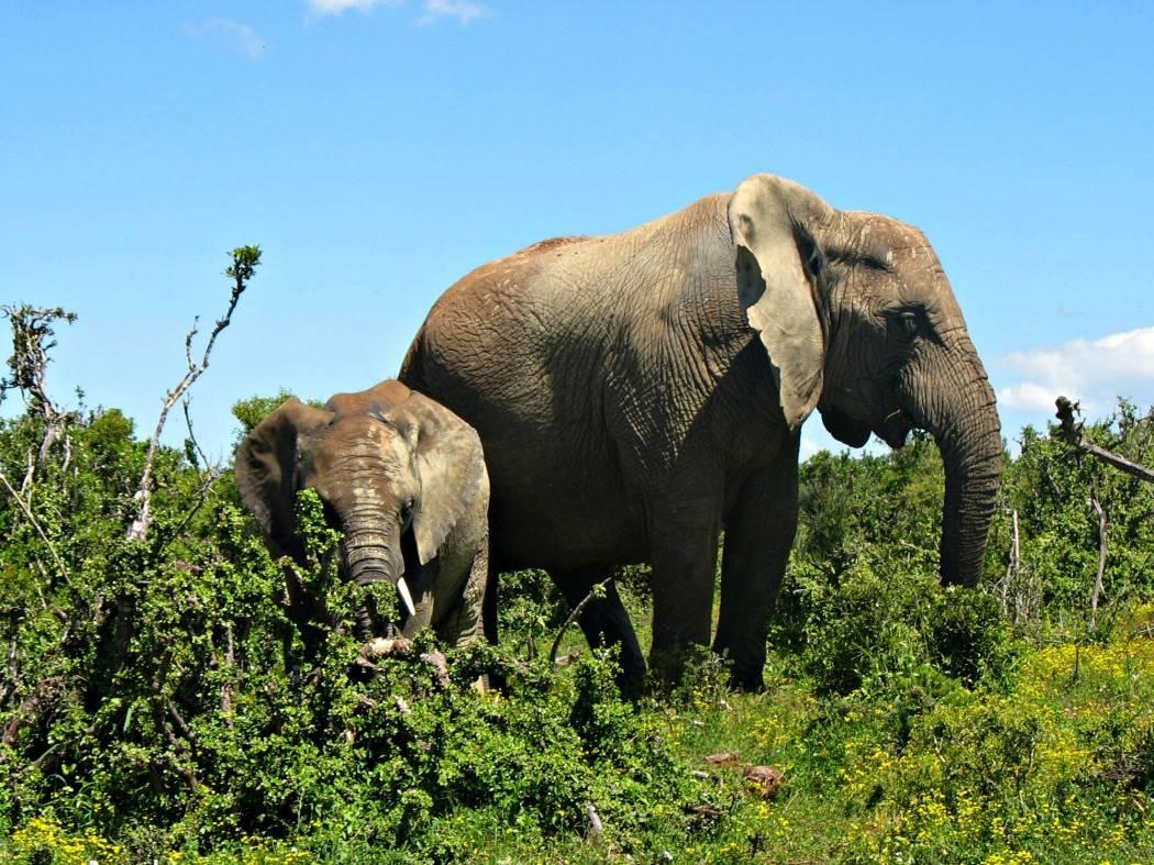 zuid-afrika-safari-olifant