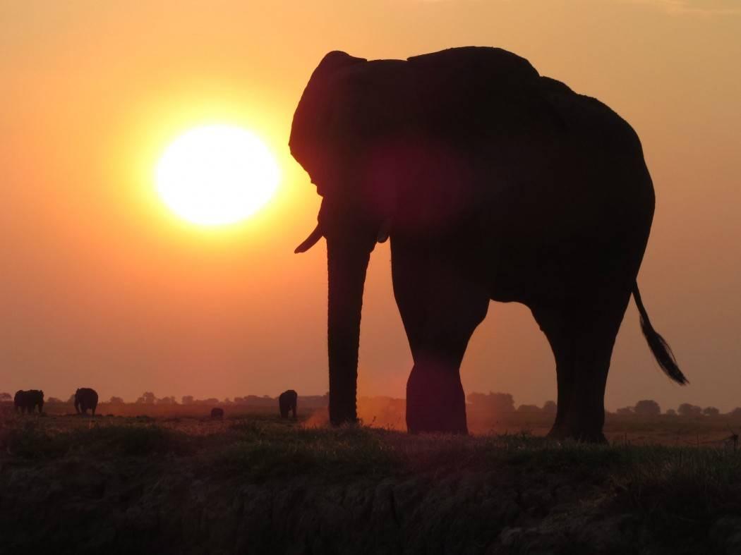 Okavangodelta, Botswana, Moremi National Park, zuid afrika online, riksja travel, reis tips zuid afrika, tips zuid afrika, excursies zuid afrika, advies zuid afrika, dag trip zuid afrika, dagje uit zuid afrika, tips voor zuid afrika, reistips zuid afrika, vakantie zuid afrika, Zuid Afrika, South Africa, op vakantie naar Zuid Afrika, reizen door Zuid Afrika, Travel Rumors, Tips Zuid Afrika, guide Zuid Afrika, reistips Zuid Afrika, vakantie tips voor Zuid Afrika, Wat te doen in Zuid Afrika, excursies in Zuid Afrika, Wijnproeven in Zuid Afrika, Hotel in Zuid Afrika, Verblijf in Zuid Afrika, Hostel in Zuid Afrika, home stay in Zuid Afrika, overnachten in Zuid Afrika, overnachting in Zuid Afrika, verblijf in Zuid Afrika, blog over Zuid Afrika, Dobberen door de Okavangodelta