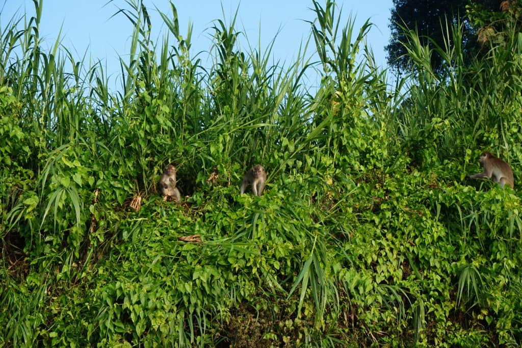Borneo Kinabatanganrivier