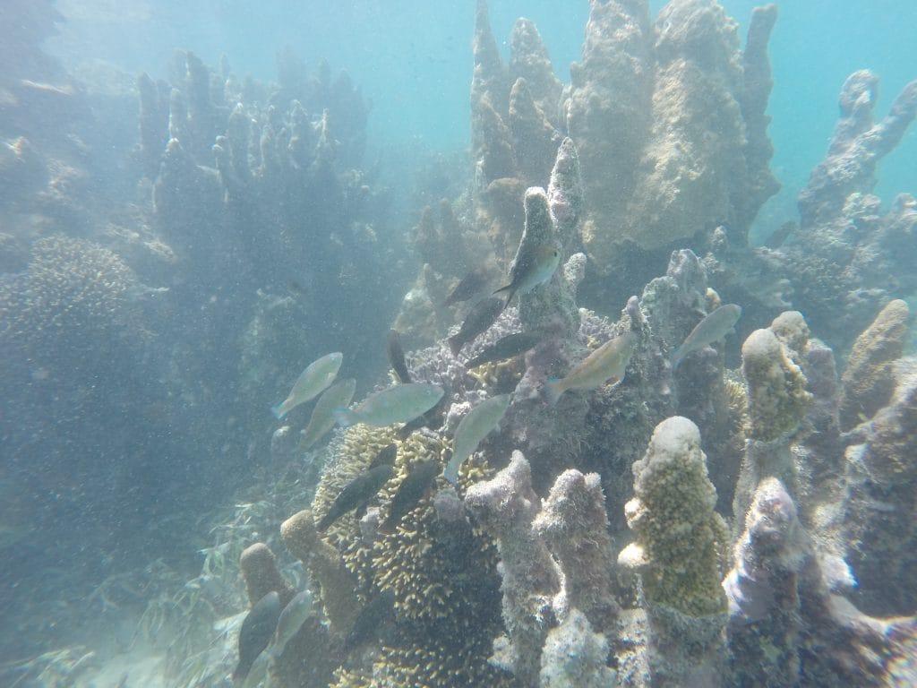 Snorkeling Zanzibar Blue Lagoon