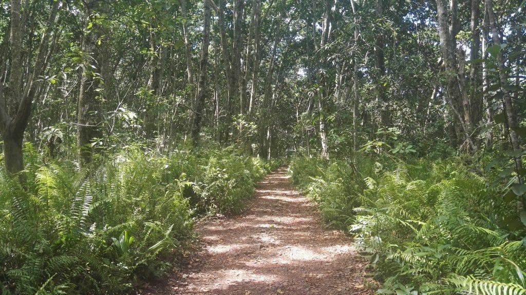 Jozani Forest Zanzibar