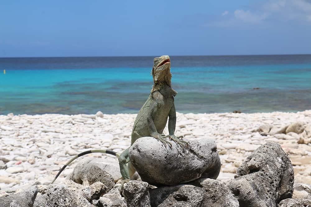 Reistips voor je vakantie op bonaire het mooiste abc eiland