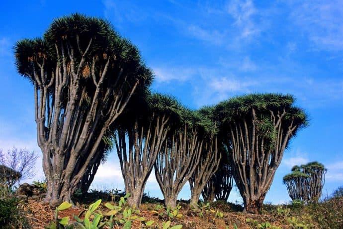 pijnbomen-la-palma-wandelen