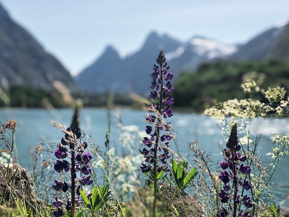 noorwegen-fjorden