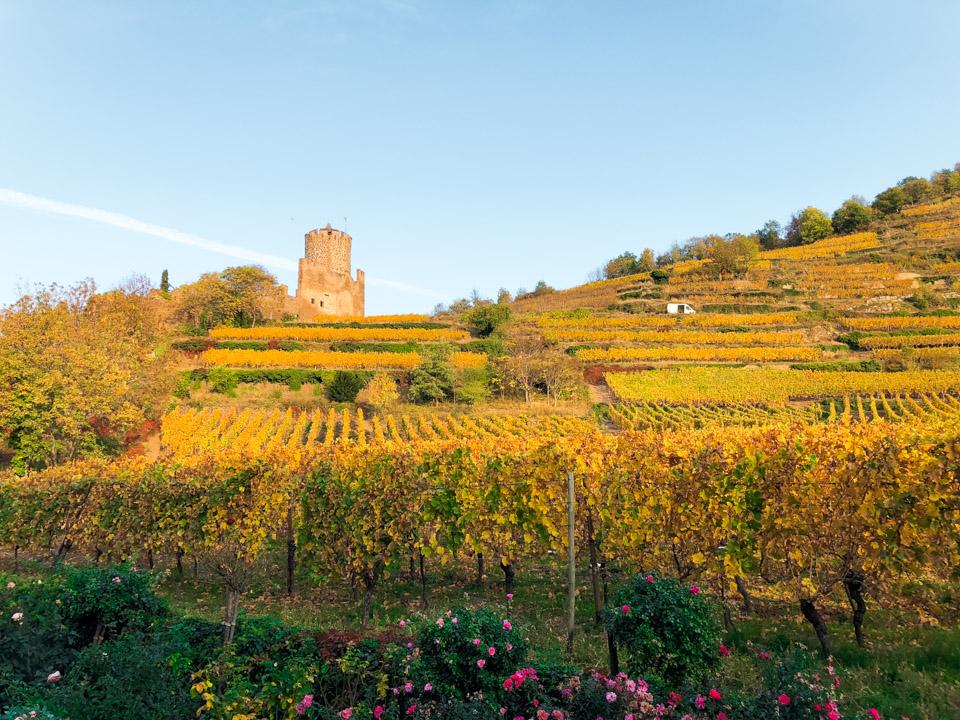 wijnreis-elzas-frankrijk