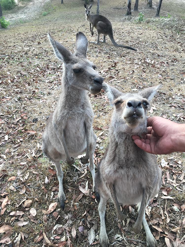 Camperreis-Australie