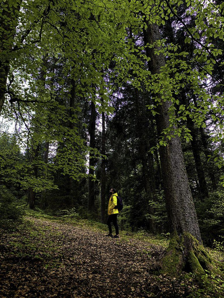 zwarte-woud-duitsland