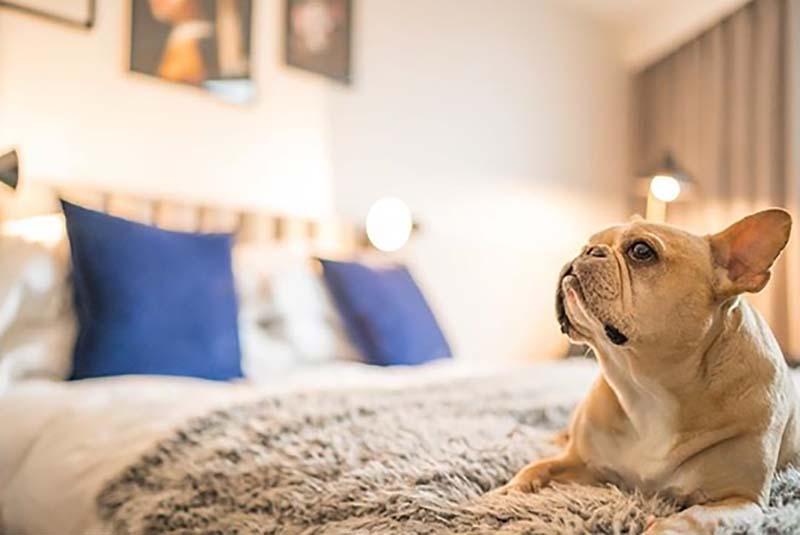 Vakantie-met-je-hond