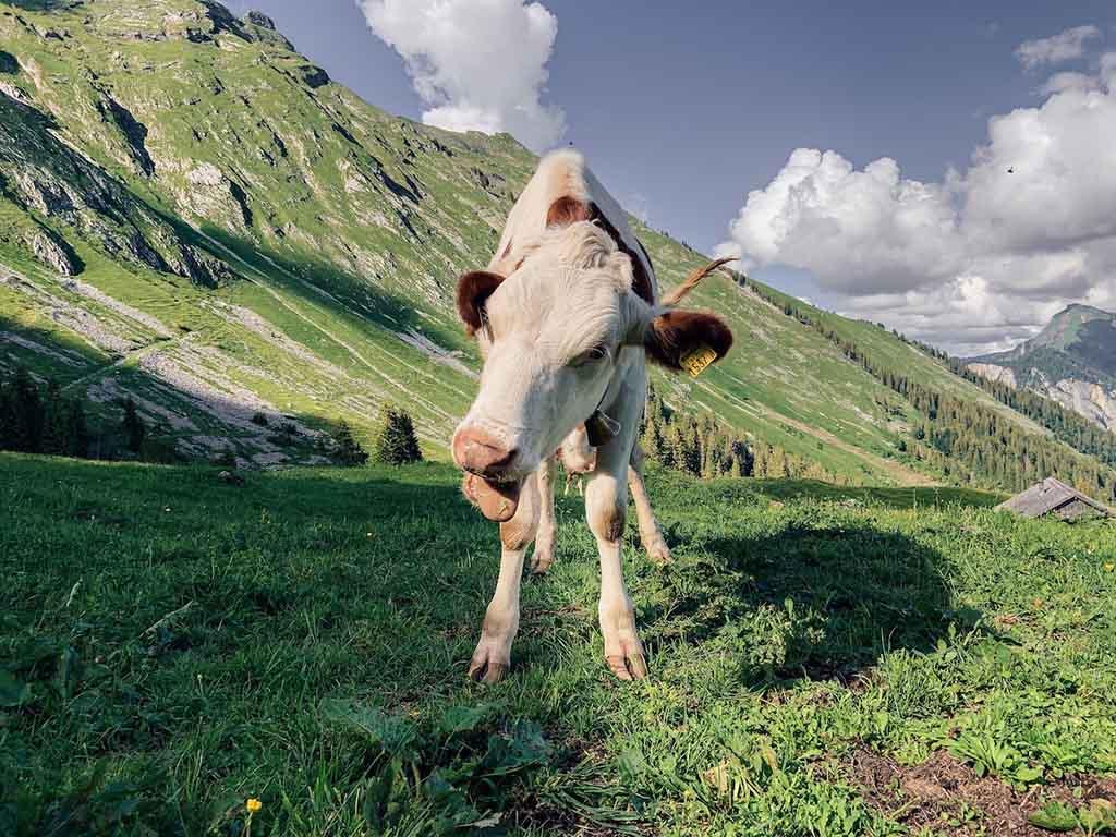 Alpengasthaus-edelweiss