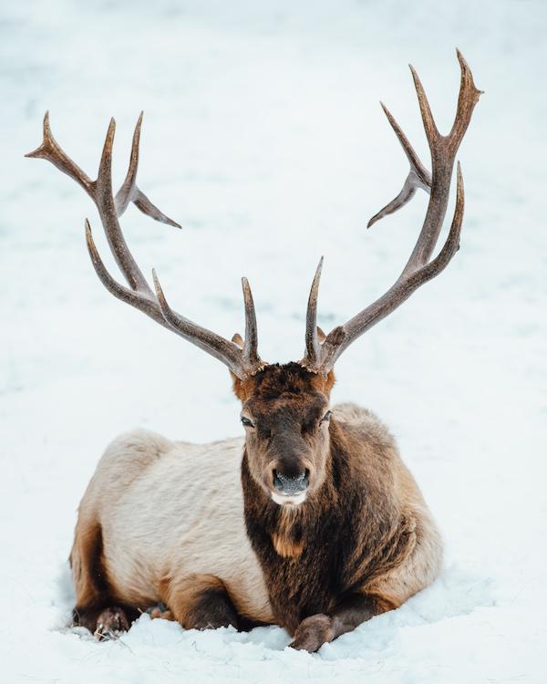 jasper-nationaal-park-dieren