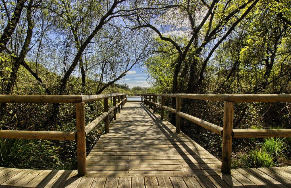 Parque-Nacional-de-Donana