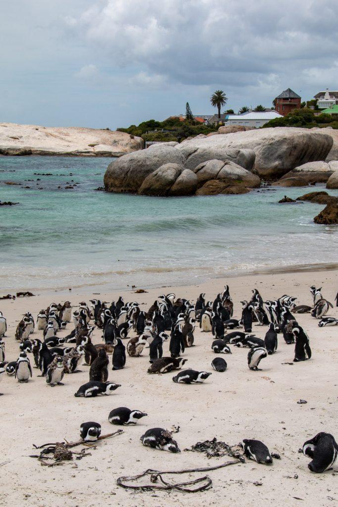 Zuid-Afrika-Kaapstad-Boulders-Beach