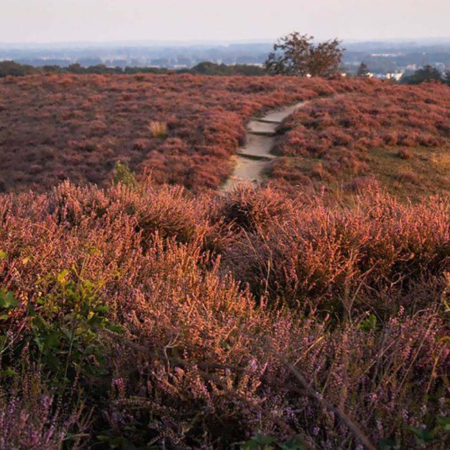 Nationaal-Park-Veluwezoom-2