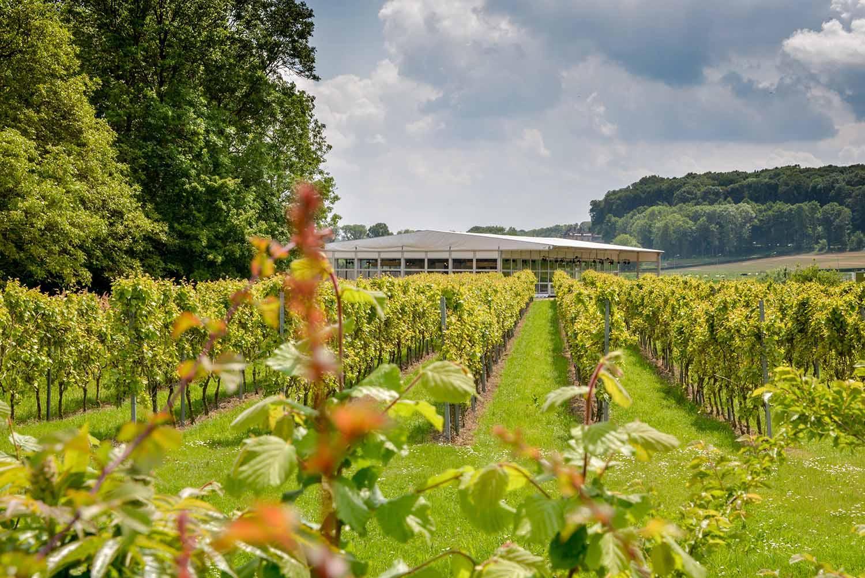 Wijnrestaurant-op-het-land